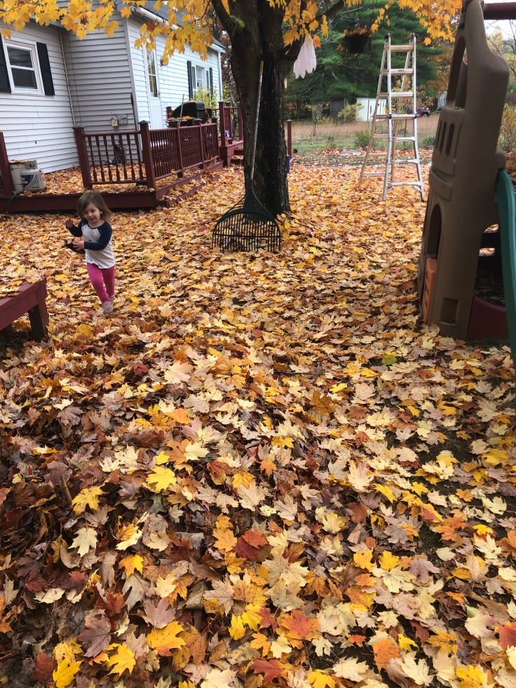 We should really do something about all of these leaves
